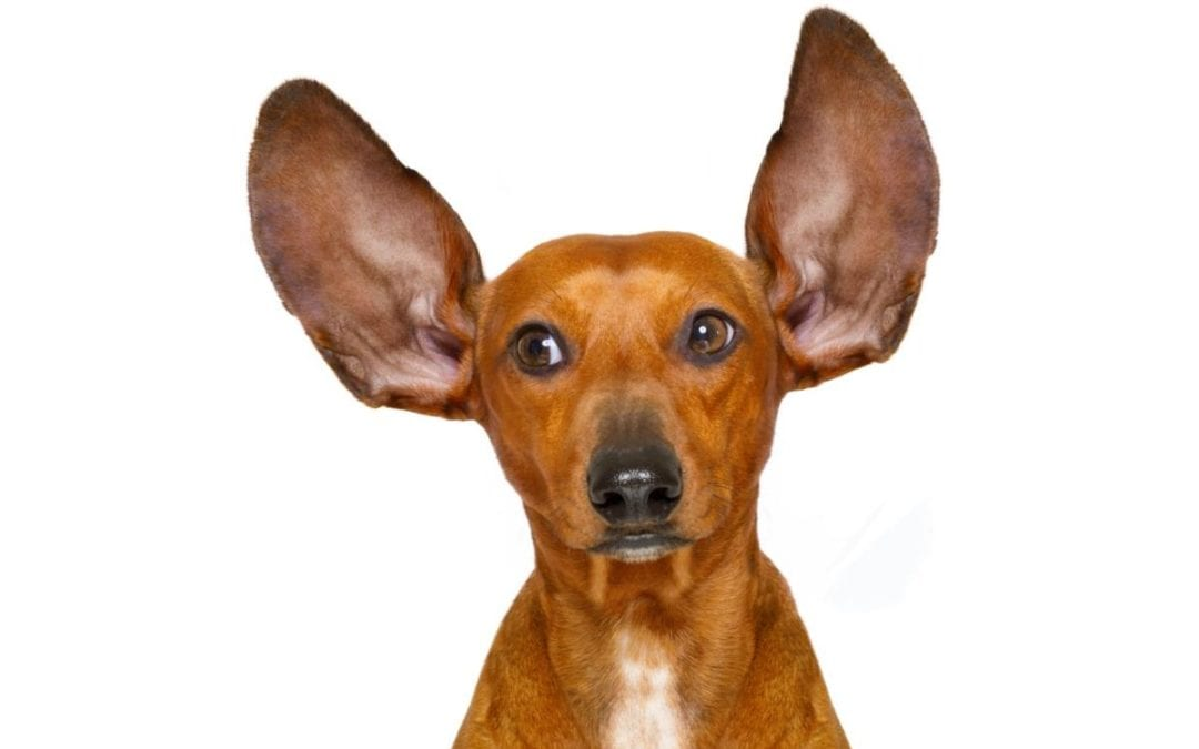 All ears: How to sell more through Level 2 Listening