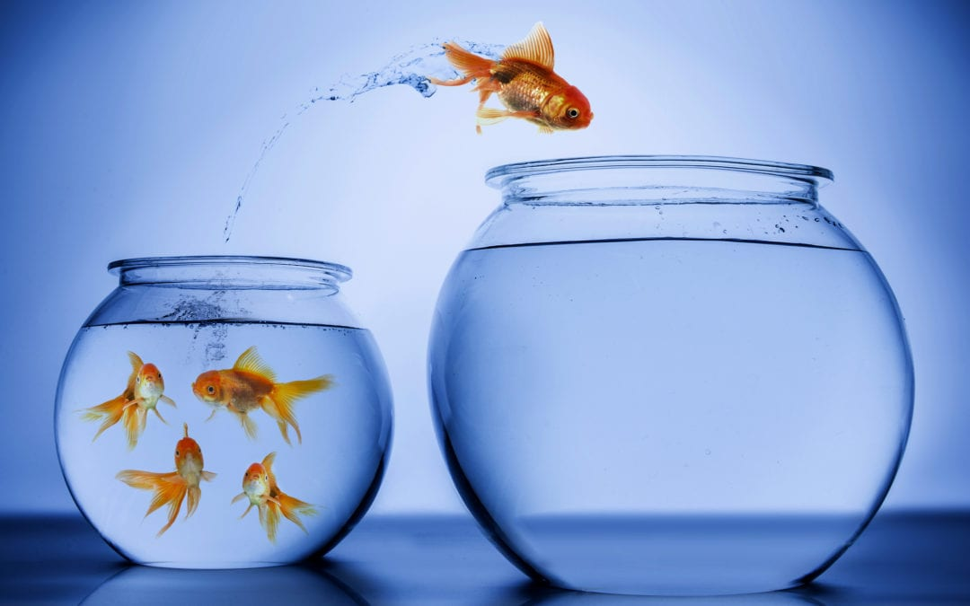 How sales leaders can continually challenge the status quo to thoughtfully achieve growth