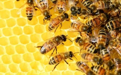 What B2B sales leaders and teams can learn from honeybees about quick and good decision making